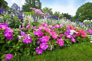 В Курске высадят полмиллиона цветов