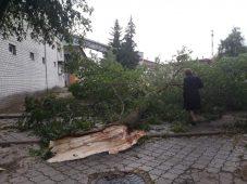 Курянку едва не убило рухнувшее дерево