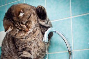 Завтра жителям 19 домов Курска отключат горячую воду