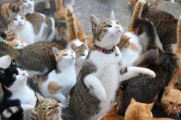 Курянка судится из-за кошек