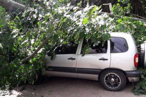 Припарковался под деревом – уехал на маршрутке