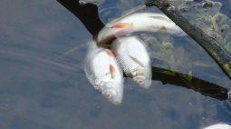 Курянам рассказали, чем опасны речные рыбы и раки