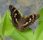 В Курской области обнаружили редкие виды бабочки и миноги