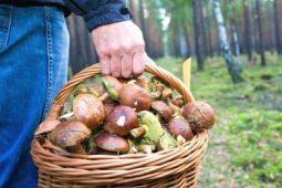 Куряне отравились свежими, сухими и замороженными грибами