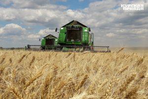 В Курской области намолочено 352 тысяч тонн зерна