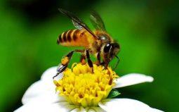 Курские пчеловоды смогут узнать график обработки полей