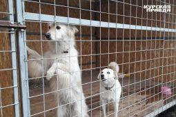 Роман Старовойт посетил пункт временной передержки собак