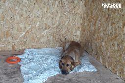 В Курской области суд приостановил работу организации по отлову животных