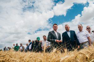 В Курской области ожидают около 5 миллионов тонн зерна