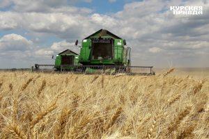 Курскими аграриями обмолочено 490 тысяч гектаров