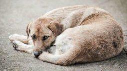 В Курске продолжают отлавливать беспризорных собак