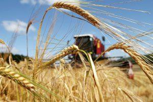 В Курской области завершается уборка зерна