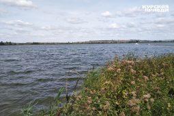 В курчатовском водохранилище обитают редкие виды флоры и фауны