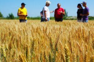В Курской области 10 фермерских хозяйств получили гранты