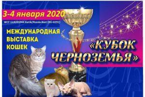 Курян приглашают на международную выставку кошек