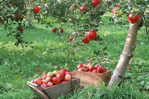 В Курской области возрождают садоводство
