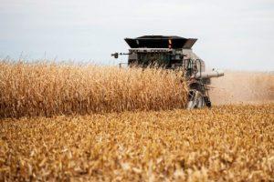 В Курской области началась уборка кукурузы