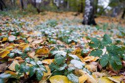 Курскую область ожидают ночные заморозки