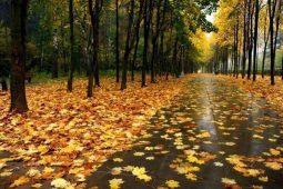 В Курской области прогнозируют дождливые выходные