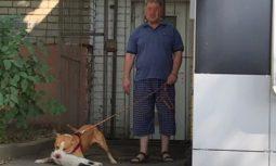 В полиции отказали в возбуждении дела в отношении курянина, натравившего питбуля на кошку
