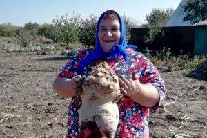 В Курской области выросла 10-килограммовая свекла
