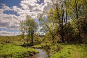 Вода в истоке ручья Головинка в Курской области не была загрязнена
