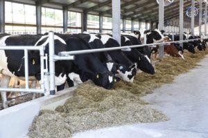 В Курской области выросло производство молока