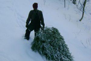 Охота за елками началась
