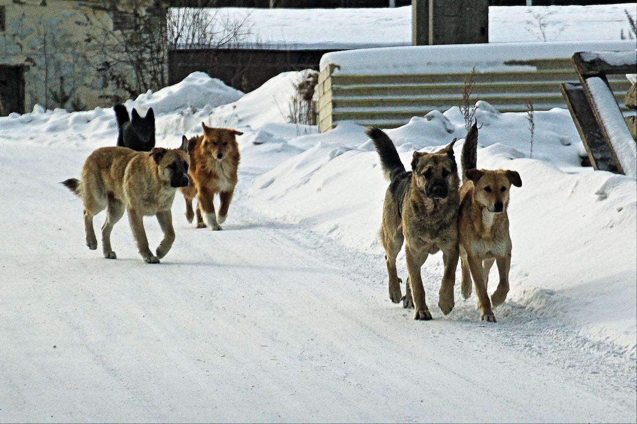 Отловом собак в Курске займется «Спецавтобаза по уборке города»