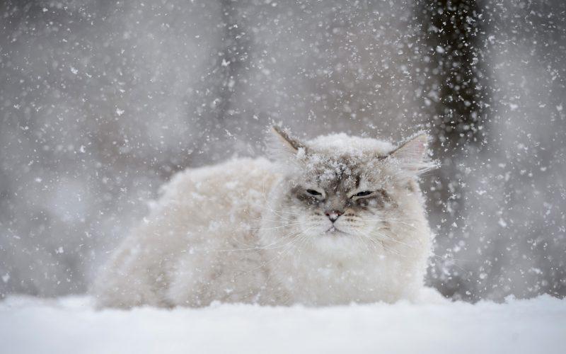 Курян предупредили о сильном снегопаде
