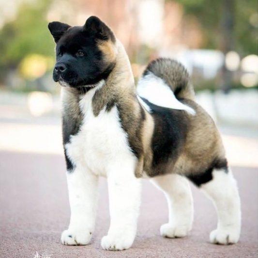 Осужден хозяин собаки, покусавшей ребенка в Курске