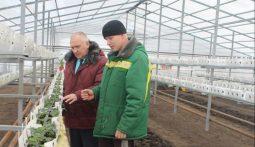 Под Курском в марте соберут первый урожай клубники