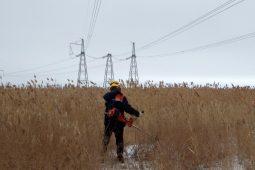В Курске уничтожат пожароопасные заросли