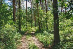 Курск: ограничен проезд по дорогам лесных урочищ