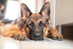 Курянина привлекут к ответственности за содержание 7 собак в антисанитарии