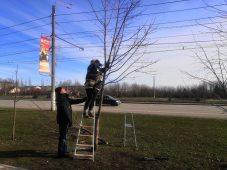 В Курске на проспекте Победы омолодили деревья