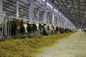 В Курске выявили нарушения в обустройстве скотомогильников