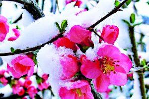 Возвратные весенние заморозки – как уберечь растения