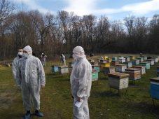 В Курской области предотвращают гибель пчел