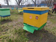Курские пчеловоды делятся опытом