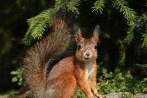 Экологи собирают данные о диких животных