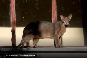 Близкий сосед: как пандемия влияет на отношение к кошкам и собакам