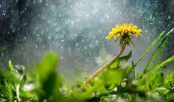 В Курской области ожидается дождь и мокрый снег