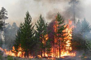 Ситуация с пожарами в Курской области  остается сложной