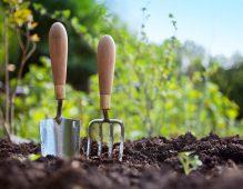 Курский садовод рассказал, как вырастить хороший урожай