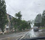 В Курске на трамвайную сеть упало дерево