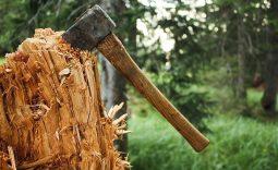 В Курской области вырубили леса на 2 миллиона рублей
