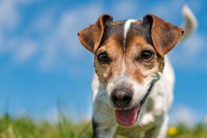 Курянок обманули мошенники при покупке щенков