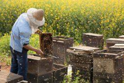 Курским пчеловодам и аграриям нужно наладить контакт
