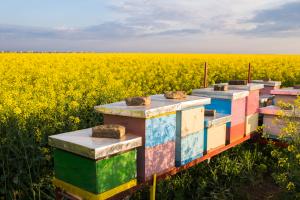 В Курской области агрокомпания начала сотрудничество с пчеловодами